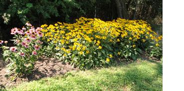 Bloomingslim2